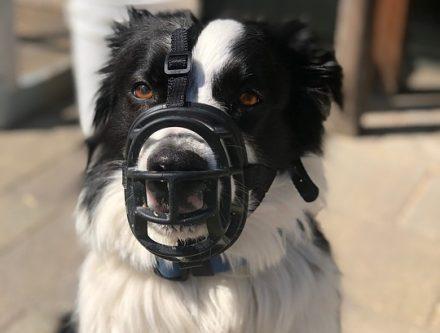 dressage des chiens